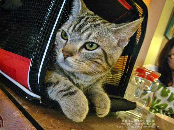 [食誌]台北芝山捷運站.貓花園 Cafe' Dog and Cats
