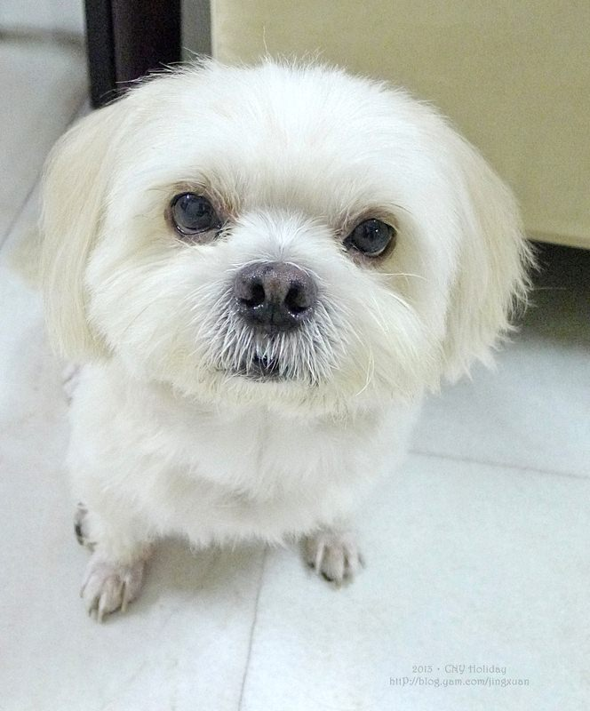 [寵物家誌]J.B., M'sia:2013 Family Pet.Dada(Maltese)